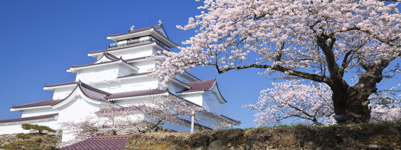 是欣赏漫天的樱花,观赏斑斓的日本锦鲤,眺望富士山壮丽景色的最佳选择