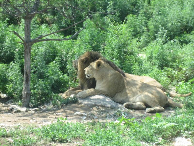 【八达岭野生动物园图片】八达岭野生动物园风景图片