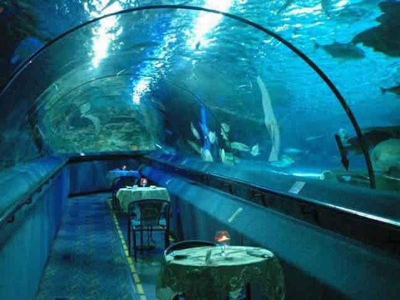 富国海底世界门票预订_北京朝阳富国海底世界门票预订