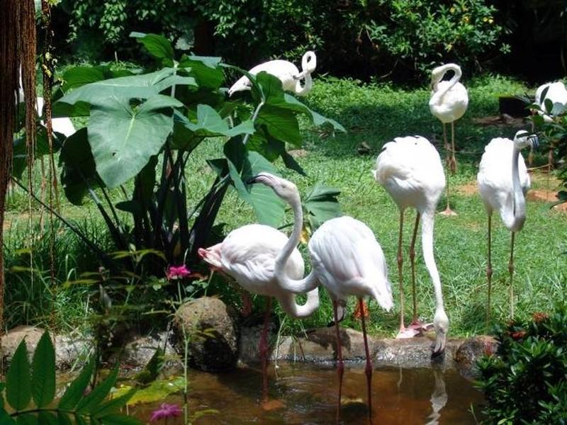 火烈鸟热带雨林餐厅