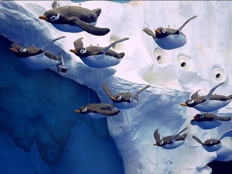 【青岛极地海洋世界图片】青岛极地海洋世界风景图片