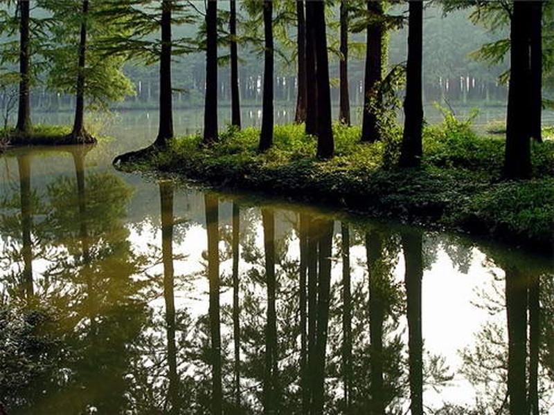 【李中水上森林公园图片】李中水上森林公园风景图片