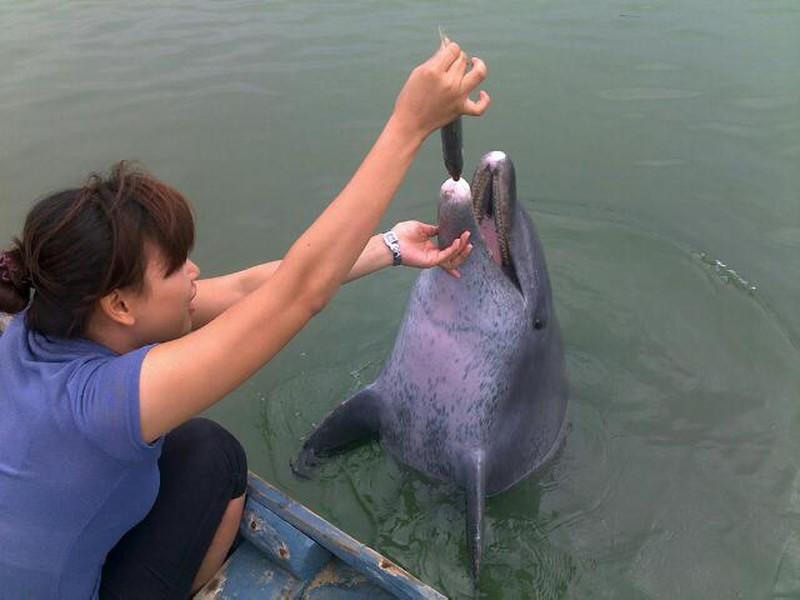 喂海豚简笔画