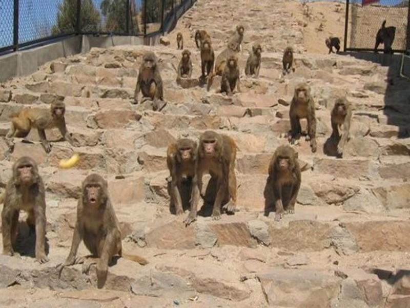 北京野生动物园位于大兴区榆垡
