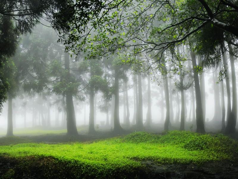 大容山国家森林公园位于广西北流市区北面约20公里 高清图片