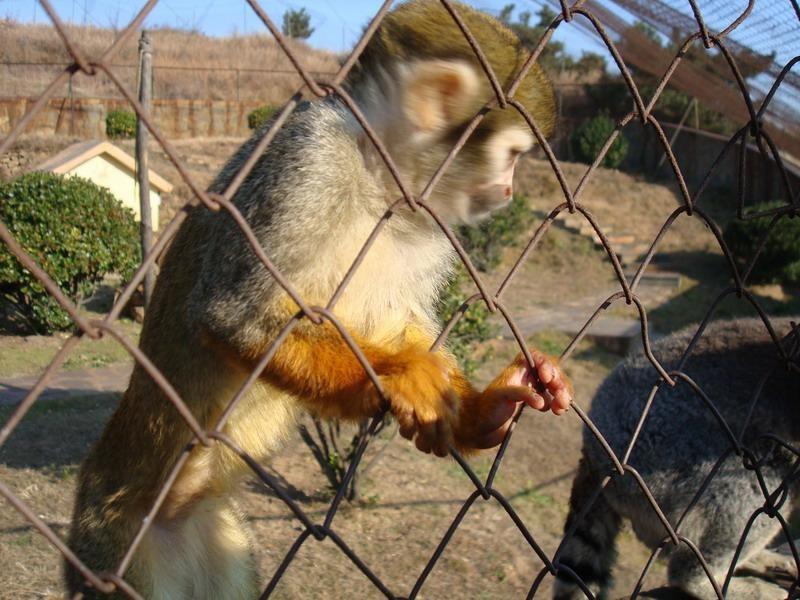 青岛森林野生动物园位于青岛市