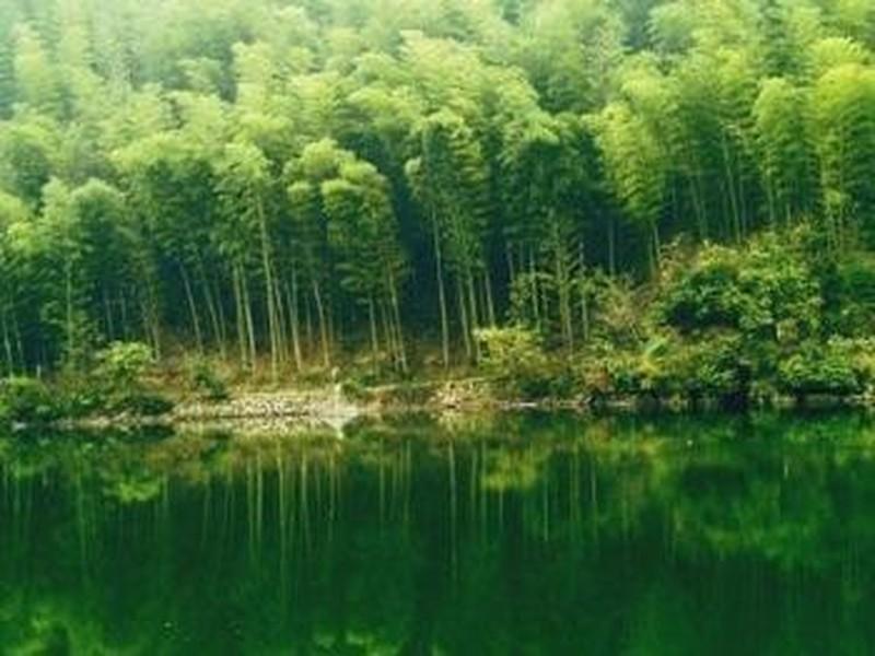 安吉中国大竹海图片】安吉中国大竹海风景图片
