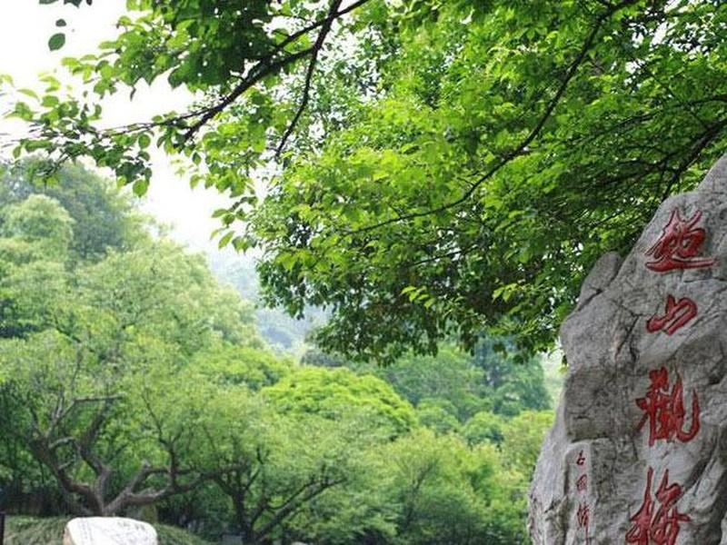 【超山风景区图片】超山风景区风景图片,照片_途牛