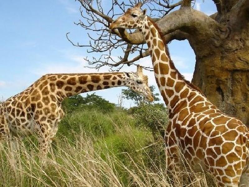 【长沙生态动物园图片】长沙生态动物园风景图片