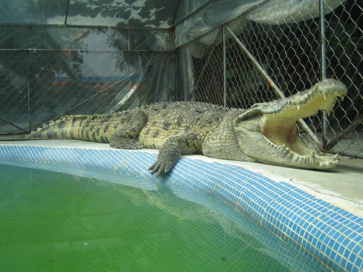 广州鳄鱼公园门票预订