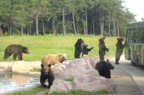 野生动物园-黄岛1日游>观赏动物