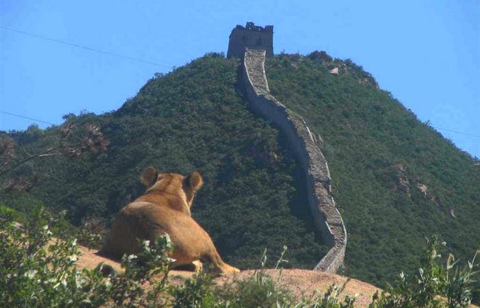 【八达岭野生动物园门票价格】2016北京八达岭野生园