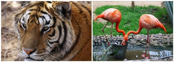 【北京野生动物园门票价格】2013北京野生动物园门票
