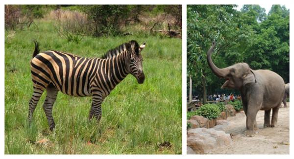 """作为""""非洲动物节"""""""