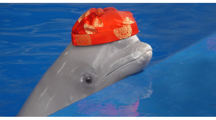 长风海洋世界2013年春季主推动物新表演