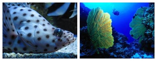 真实海底鱿鱼图片大全