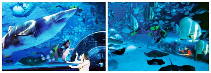 大连圣亚极地世界以展示海洋动物为主