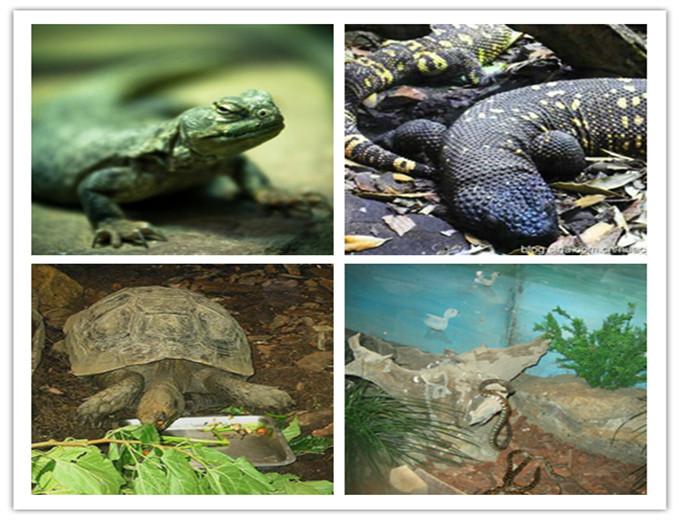 包含各种两栖爬虫动物,包括著名的扬子鳄和大海龟.