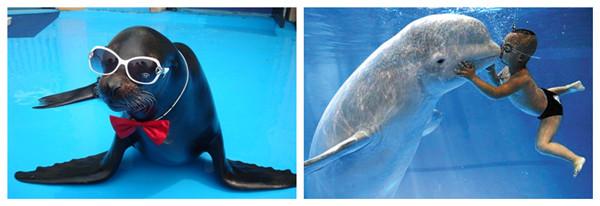 >青岛极地海洋世界门票    海洋生物区分为十余个稀有海洋动物饲养池
