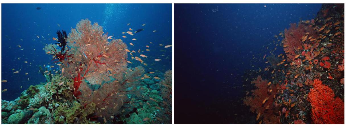浙江 杭州 上城区 杭州海底世界   ★珊瑚礁生物馆★   &nbsp